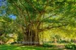 El Parque de Mahatma Gandhi, Ave 5ta, Miramar, Havanna, Cuba, 01.02.2015 [(c) Christian Behring, www.christian-behring.com]