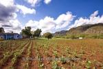 Bei einem privaten Tabakbauern in Valle de Vinales (das Tal von Vinales), Cuba, 21.01.2015 [(c) Christian Behring, www.christian-behring.com]