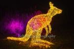 """Kaenguruh, """"Weihnachten im Tierpark"""" (21.1119 - 05.01.2020), Lichtfest im Tierpark, Berlin, 01.12.2019"""